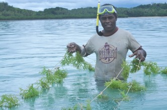 A farmer holds up a couple of lines of seaweed.